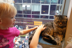 Cat Cafe MoCHA, Takeshita Dori, Harajuku, traveling with kids, family travel, cat cafe kids
