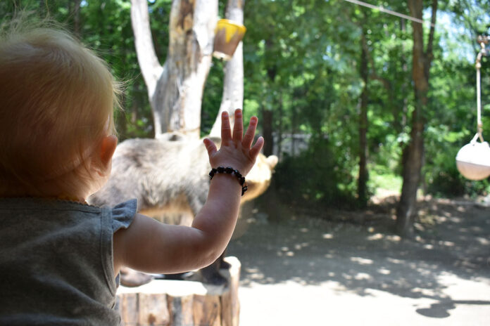 Baby playing with brown bears at Everland in South Korea