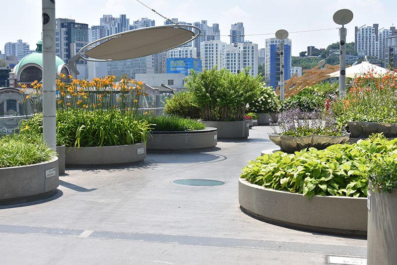 Rooftop Garden Bridge Falling in Love in Korea